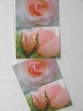Rosenpostkarte rosa