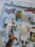 Adventskalender 'Hunde - Freunde fürs Leben'