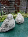 Lieblliches Vogelpaar