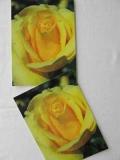 Rosenpostkarte gelb