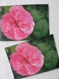 Rosenpostkarte pink mit Blättern