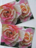 Rosenpostkarte Malerrose